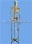 Скелет человека 42 см